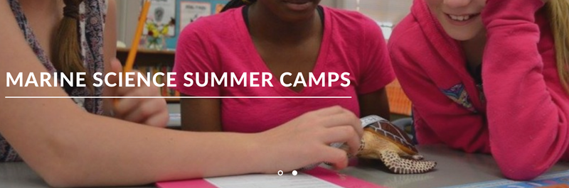 Marine Science Summer Camps