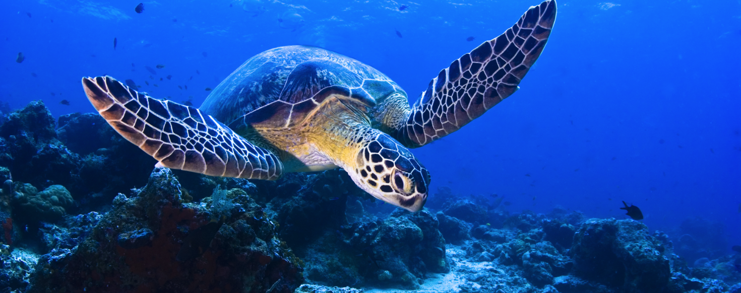 Sea Turtles Need A Fighting Chance