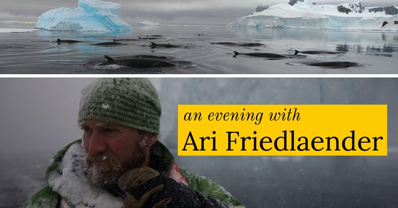 An Evening with Ari Friedlaender, Marine Ecologist & National Geographic Explorer