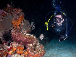 diving-in-Cozumel-at-night.jpg